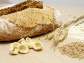 Tritordeum wint Sustainable Food Award